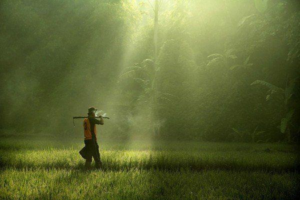 La búsqueda Espiritual, la búsqueda del Buey Segunda parte